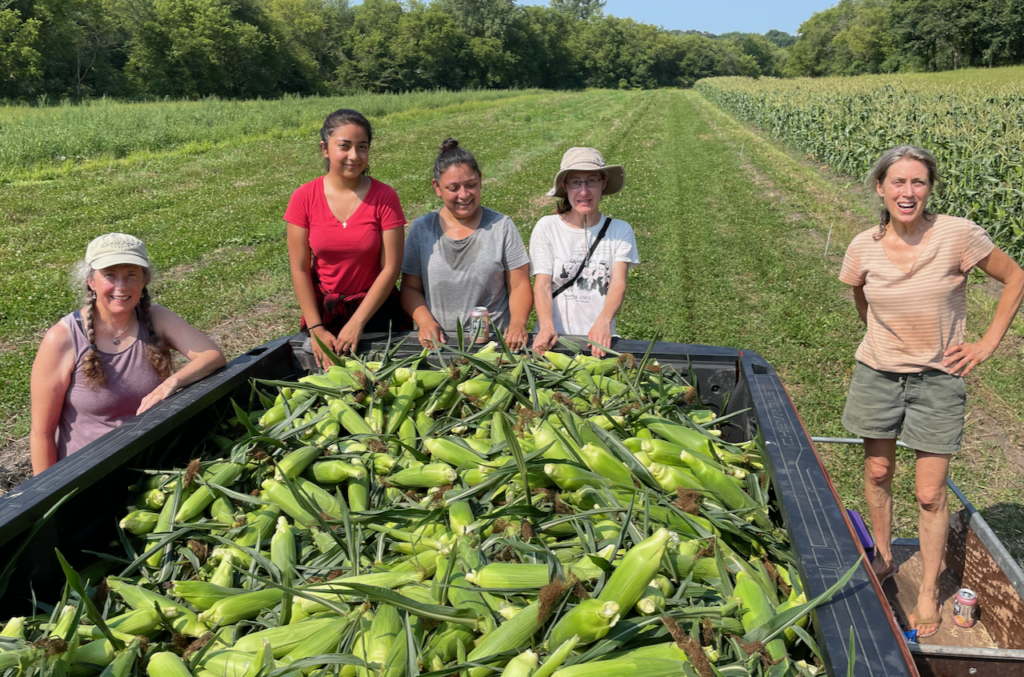 Volunteers gathered around freshly harvested corn