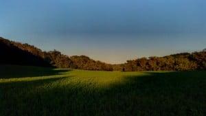 Alfalfa in the Evening