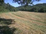 after oats harvest