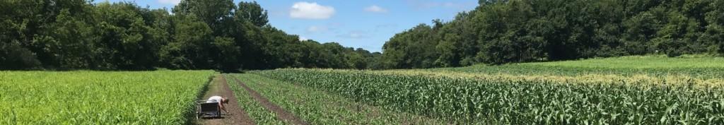 Corn Project 2020