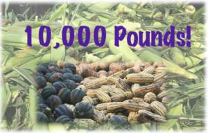 10,000 Pounds!